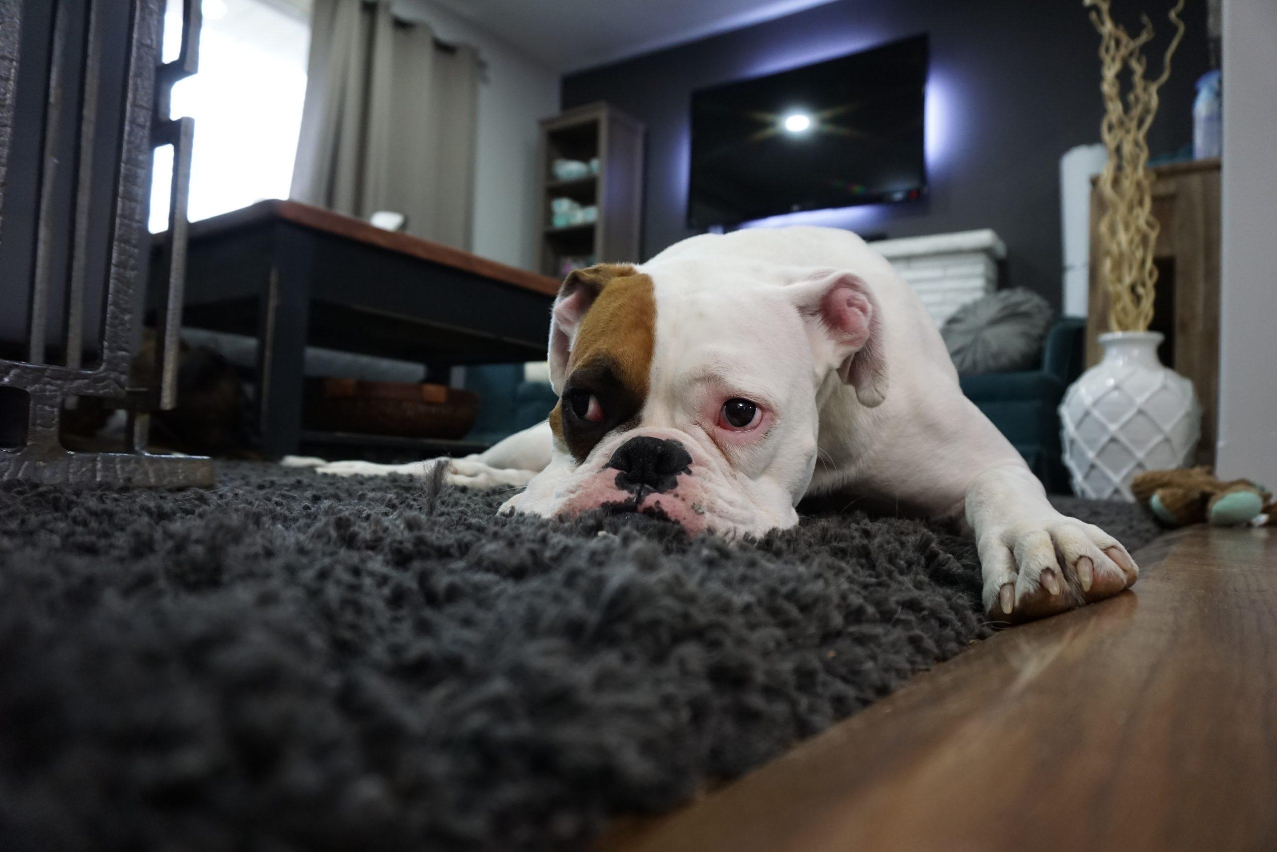 rentrée des classes chien seul