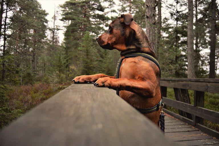 promenade chien Gers