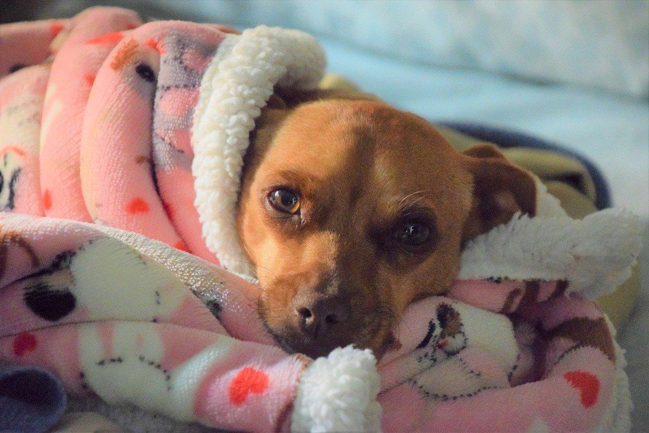 médecines douces pour chien