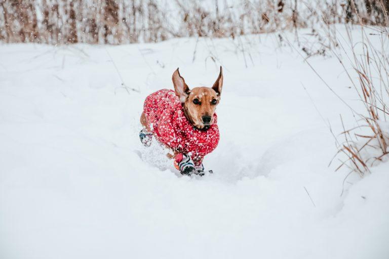 sorties petit chien hiver