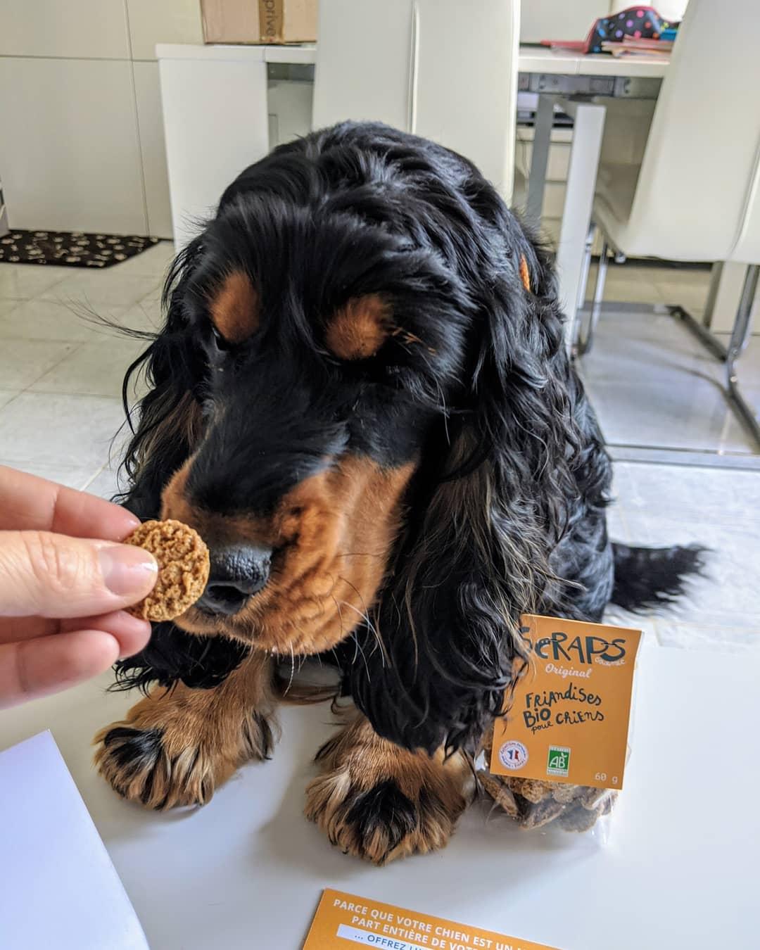 avis friandises bio pour chien