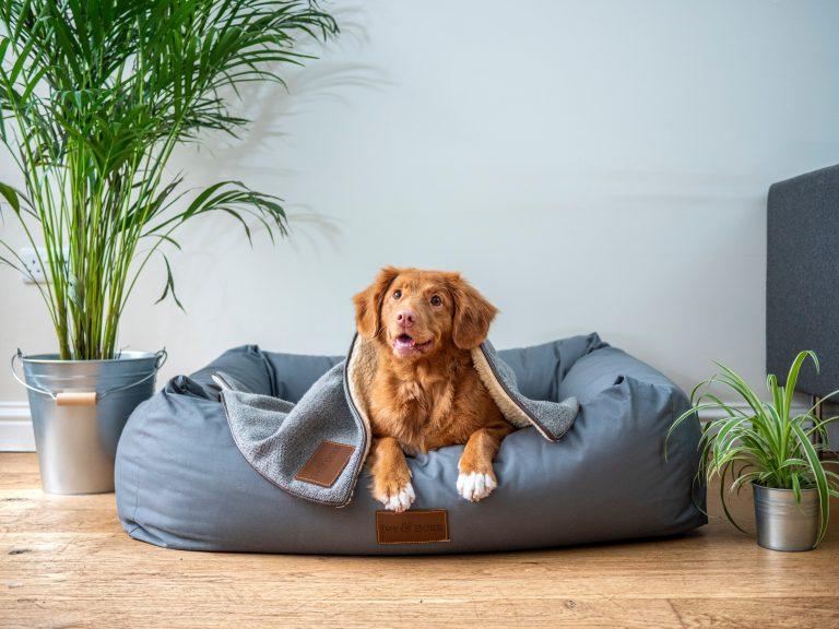 adopter un chien 2021
