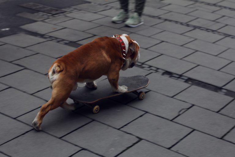 skate avec son chien