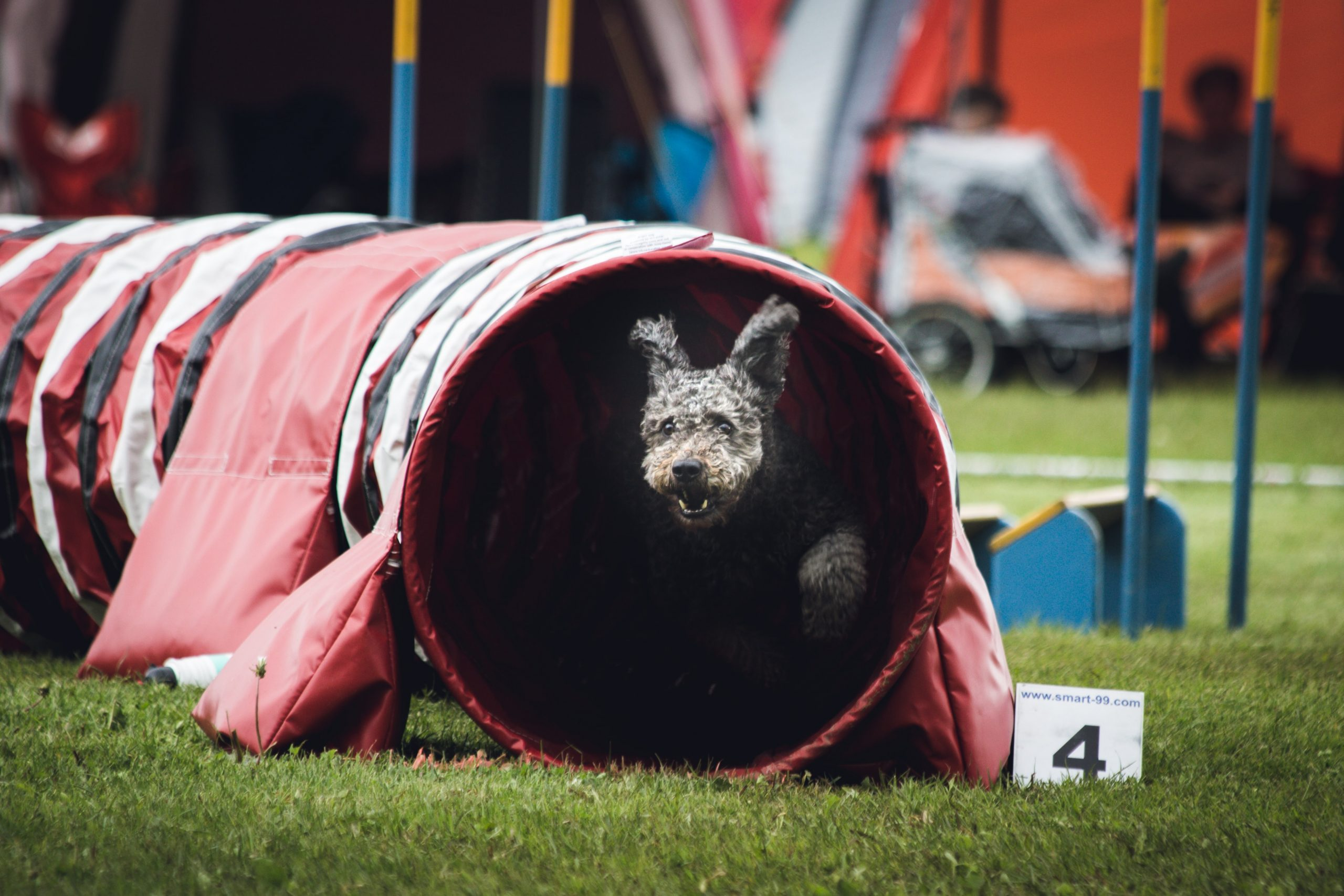 sports canins tendances