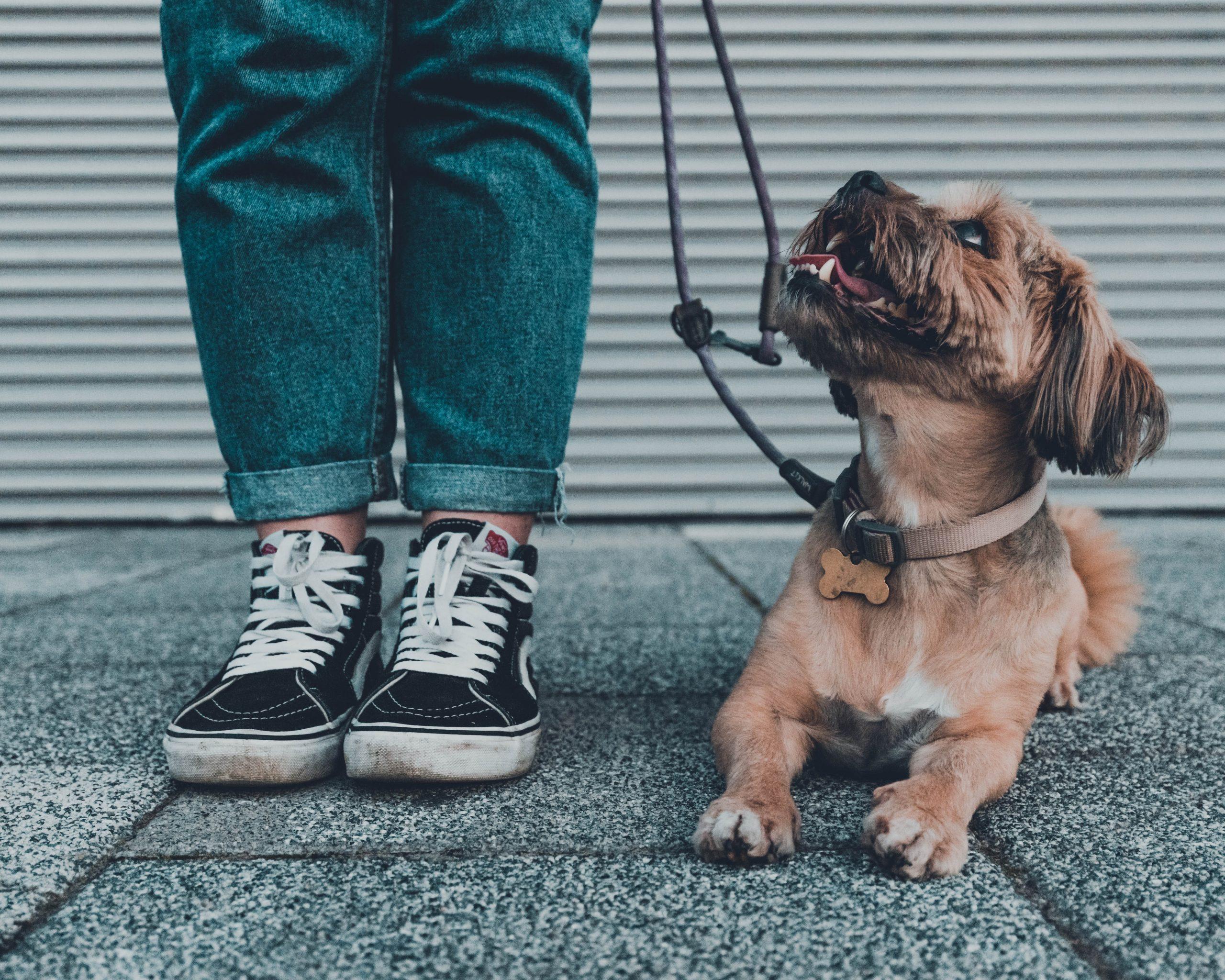 cours éducation canine urbaine gratuit toulouse