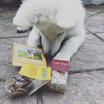 avis friandises bio pour chien Scraps