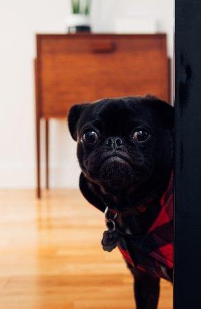 jeu cache-cache chien à la maison