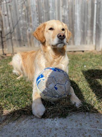 jeu chien maison