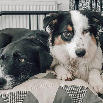 avis friandises pour chien bio