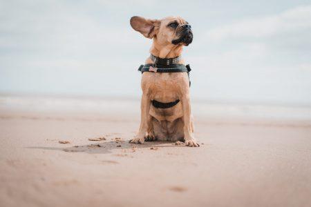 chien plage France été 2020