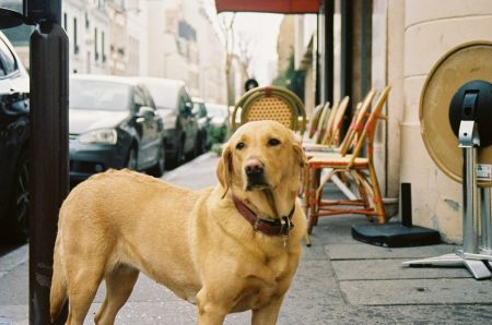 promener un chien à Paris